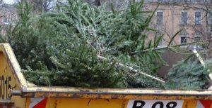 Caçamba para descarte de árvores de Natal